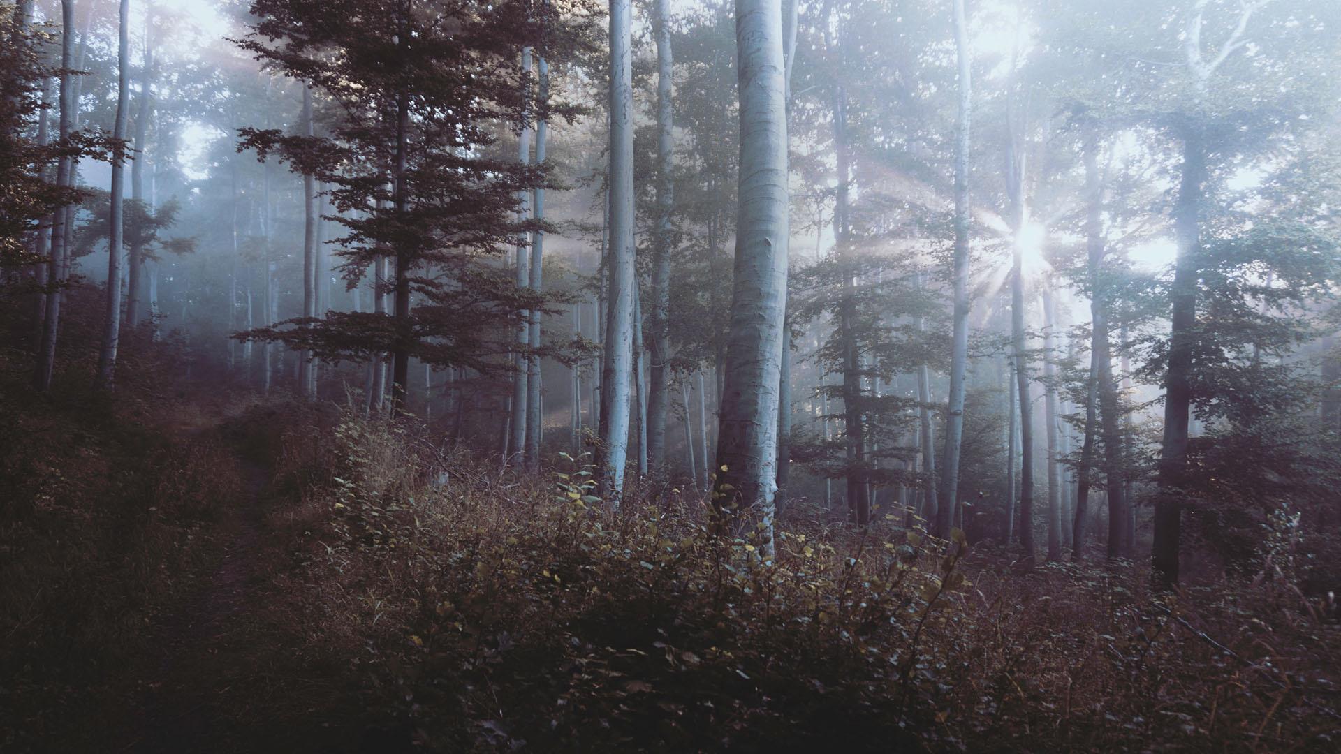 forestb2